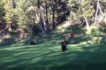 bear on a golf course