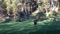 bear on a golf course