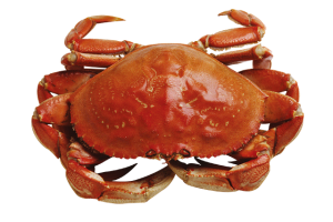 Crab plane