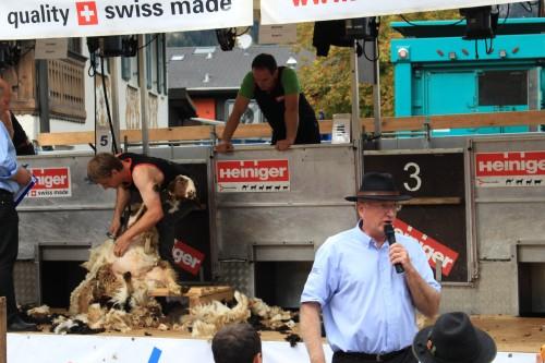 sheep shearing garmisch 500x333 - Garmisch-Partenkirchen + Atlas Grand Hotel review: Day 6