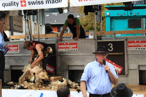 sheep shearing garmisch 500x333 - Exploring Garmisch-Partenkirchen, Germany + Atlas Grand Hotel review
