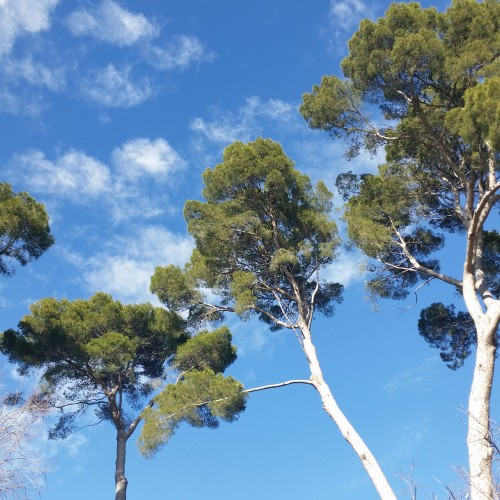 retiro trees 500x500 - A day exploring Madrid, Spain: Around The World