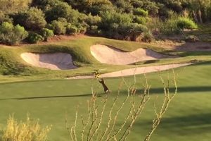 mountain lion playing on golf course 300x200 - Mountain lion plays with flag stick on golf course: Video