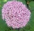 charleston-flowers