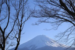 mt fuji trees 300x200 - Travel Contests: March 21, 2018 - Japan, Ireland, California, & more