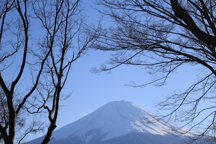 mt fuji trees 700x467 - Travel Contests: March 21, 2018 - Japan, Ireland, California, & more