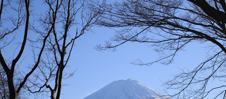 mt fuji trees 730x320 - Travel Contests: March 21, 2018 - Japan, Ireland, California, & more