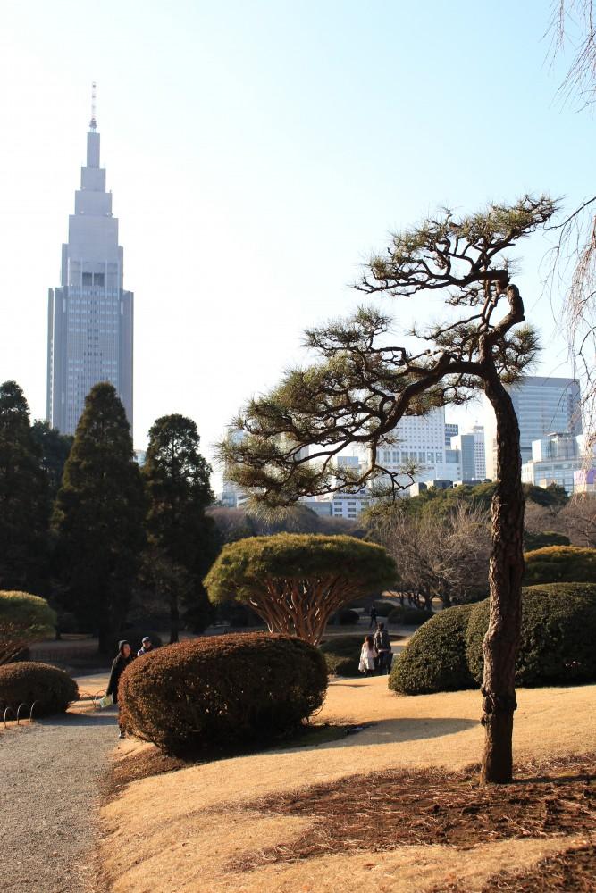 Shinjuku-Gyoen-garden