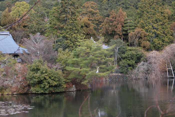 ryoanji temple 700x467 - A visit to Ryoanji Temple, Kinkaku Temple, & Fushimi Inari Shrine + eating takoyaki & okonomiyaki in Kyoto, Japan
