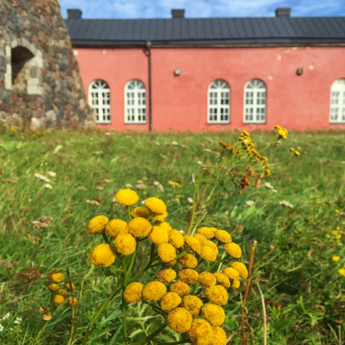 suomenlinna flowers 700x700 - Exploring the Suomenlinna Sea Fortress in Helsinki, Finland