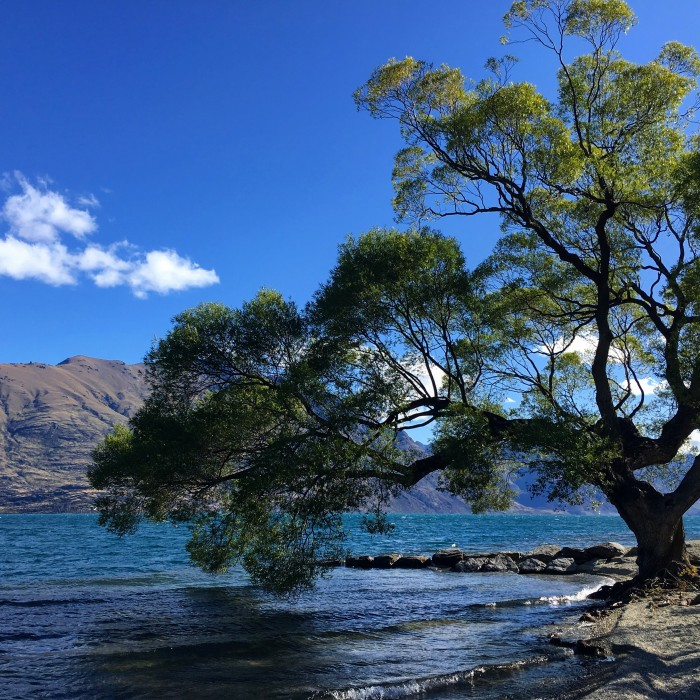 giant tree queenstown lake wakatipu 700x700 - Queenstown Motel Apartments - Queenstown, New Zealand review