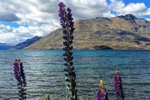 lake wakatipu queenstown nz 300x200 - Travel Contests: April 11, 2018 - New Zealand, China, Hawaii, & more