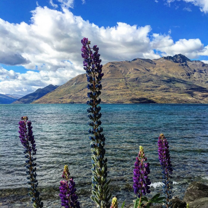 lake wakatipu queenstown nz 700x700 - A walk around Queenstown & visit to Fergburger