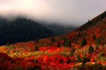 logan canyon fall 150x100 - Logan, Utah: Sights to delight all your senses