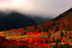 logan canyon fall 300x200 - Logan, Utah: Sights to delight all your senses