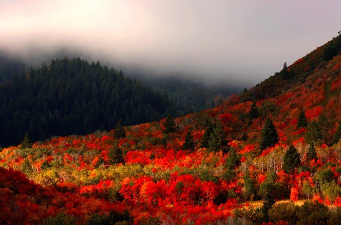logan canyon fall 700x463 - Logan, Utah: Sights to delight all your senses
