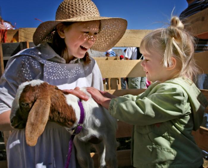 logan utah goats 700x566 - Logan, Utah: Sights to delight all your senses