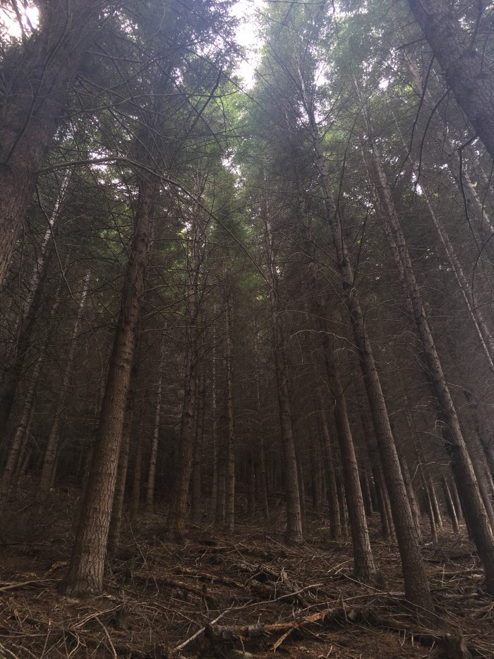 queenstown forest 700x933 - A visit to Skyline Queenstown in Queenstown, New Zealand