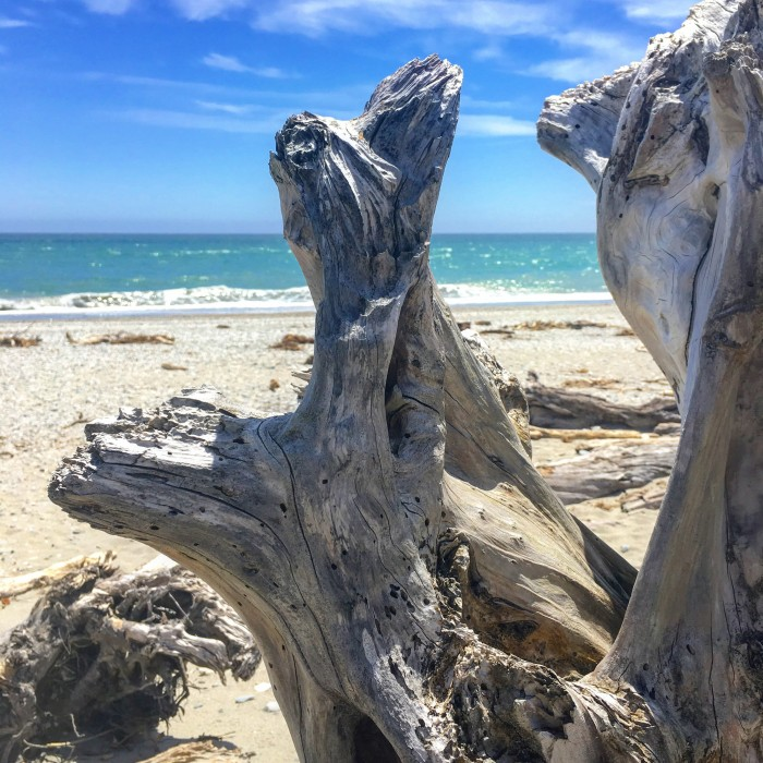 ship creek beach driftwood 700x700 - Queenstown to Franz Josef, New Zealand by bus