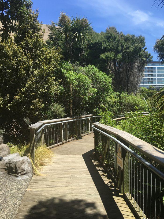te papa tongarewa bush walk 700x933 - Exploring the museums & parks of Wellington, New Zealand