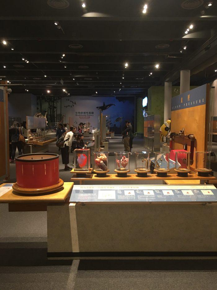 hong kong science museum kids exhibits 700x933 - A rainy day in Hong Kong - Science Museum & Kau Kee noodles