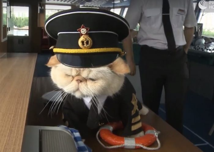 russian sailor cat 700x496 - Russian river cruise features cats dressed in maritime uniforms
