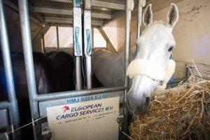 how do horses travel to the olympics 300x200 - How do horses travel to the Olympics?