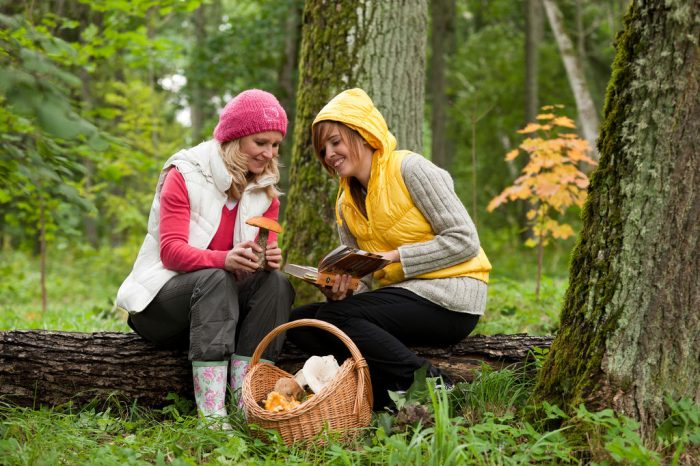 estonia mushroom picking 700x466 - From nature to the table: How Estonia connects to its Deepest Roots