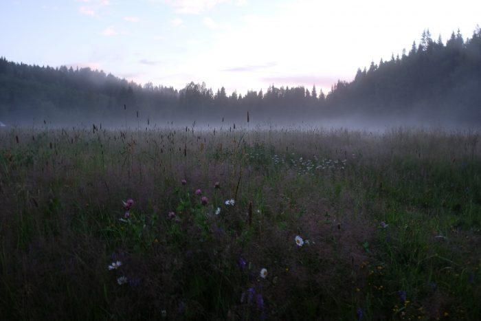 tjarn fields mist 700x467 - A relaxing visit to Tjarn farmstead in Vasterbotten, Sweden