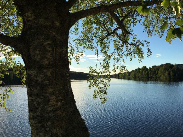 grano beckasin river 700x525 - Sleeping in a treehouse at Granö Beckasin in Granö, Sweden