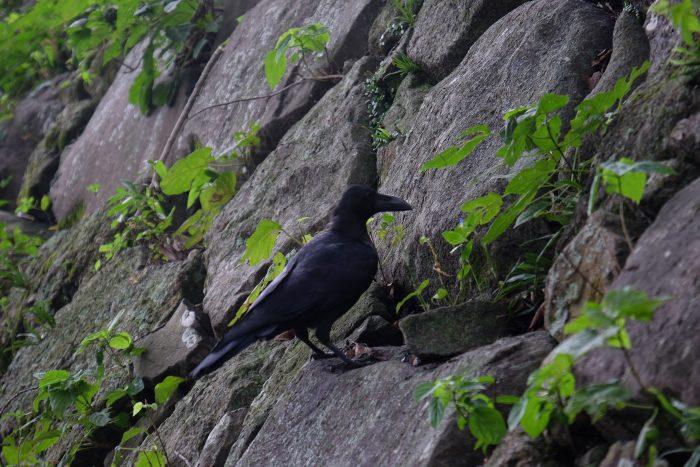 fukuoka castle birds 700x467 - A walking tour of the parks, shrines, & temples of Fukuoka, Japan