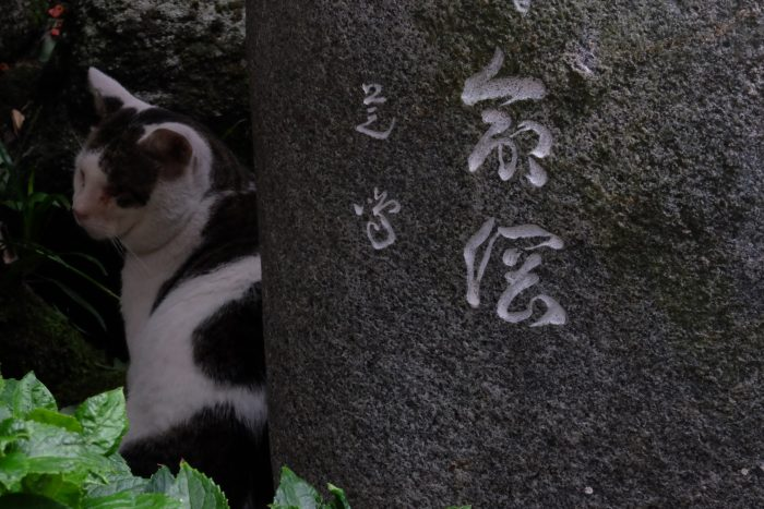 kushida shrine cat 700x467 - A walking tour of the parks, shrines, & temples of Fukuoka, Japan
