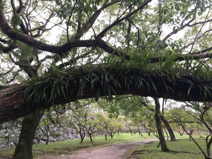 maizuru park trees 700x525 - A walking tour of the parks, shrines, & temples of Fukuoka, Japan