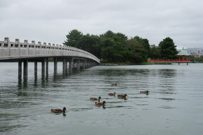 ohori park ducks 700x467 - A walking tour of the parks, shrines, & temples of Fukuoka, Japan