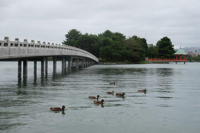 ohori park ducks 700x467 - A walking tour of the parks, shrines, & temples of Fukuoka, Japan