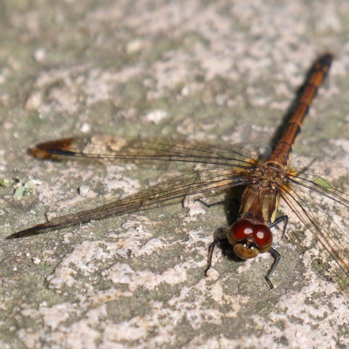 bulguksa temple dragonfly 700x700 - A day trip from Busan to Gyeongju, South Korea