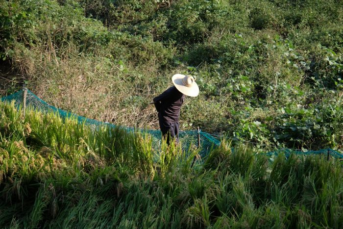 seokguram grotto farmer 700x467 - A day trip from Busan to Gyeongju, South Korea