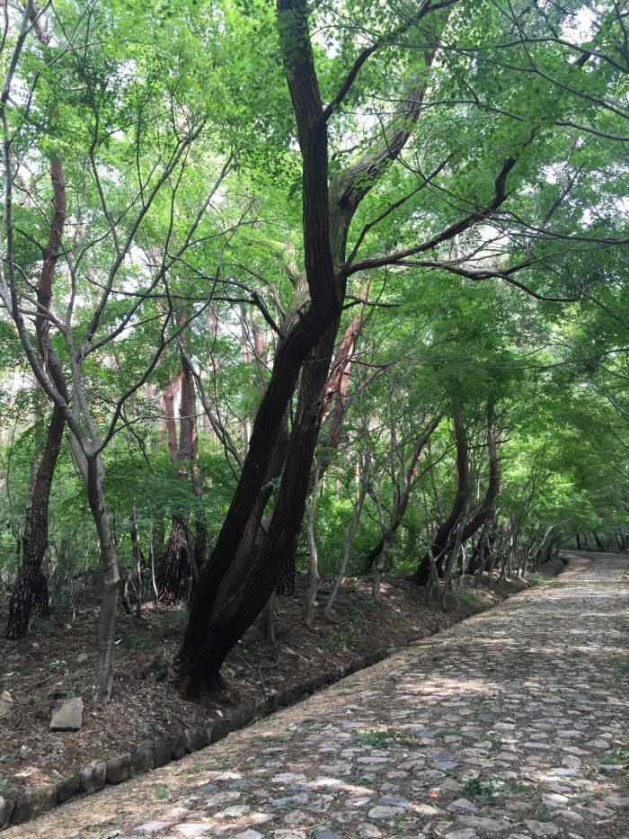 seokguram grotto hike path 700x933 - A day trip from Busan to Gyeongju, South Korea