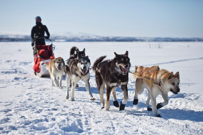 dogsledding tromso norway 700x466 - Top things to do during the Polar Night in Tromsø, Norway