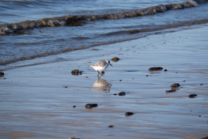 arcachon beach bird 700x467 - A day trip from Bordeaux to Dune du Pilat & Arcachon