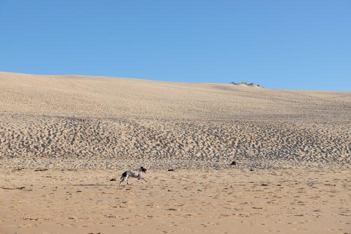 dune du pilat dog 700x467 - A day trip from Bordeaux to Dune du Pilat & Arcachon