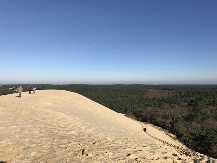 dune du pilat forest 700x525 - A day trip from Bordeaux to Dune du Pilat & Arcachon