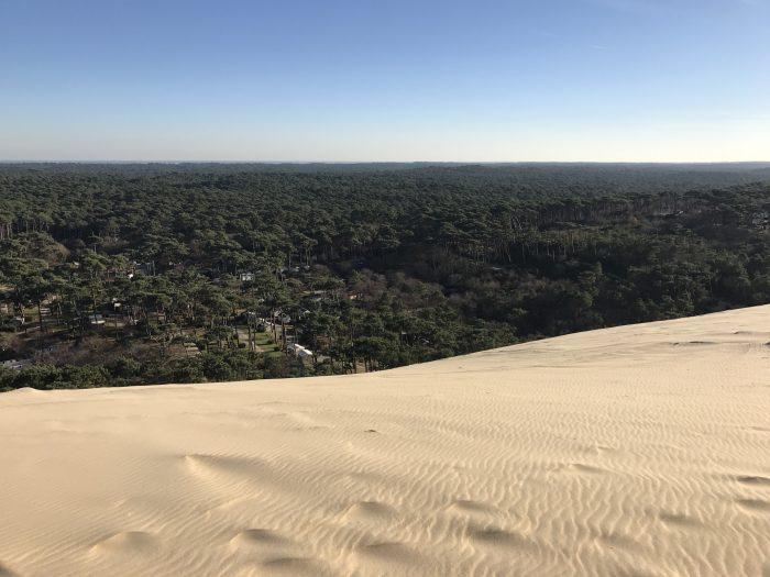 dune du pilat france forest 700x525 - A day trip from Bordeaux to Dune du Pilat & Arcachon