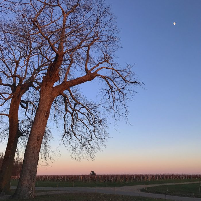 winery sunset winter 700x700 - A wine tasting tour of Bordeaux including Saint Emilion, Chateau de Sales, & Chateau de Ferrand