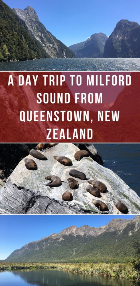 a day trip to milford sound from queenstown new zealand 491x1000 - A day trip to Milford Sound from Queenstown, New Zealand