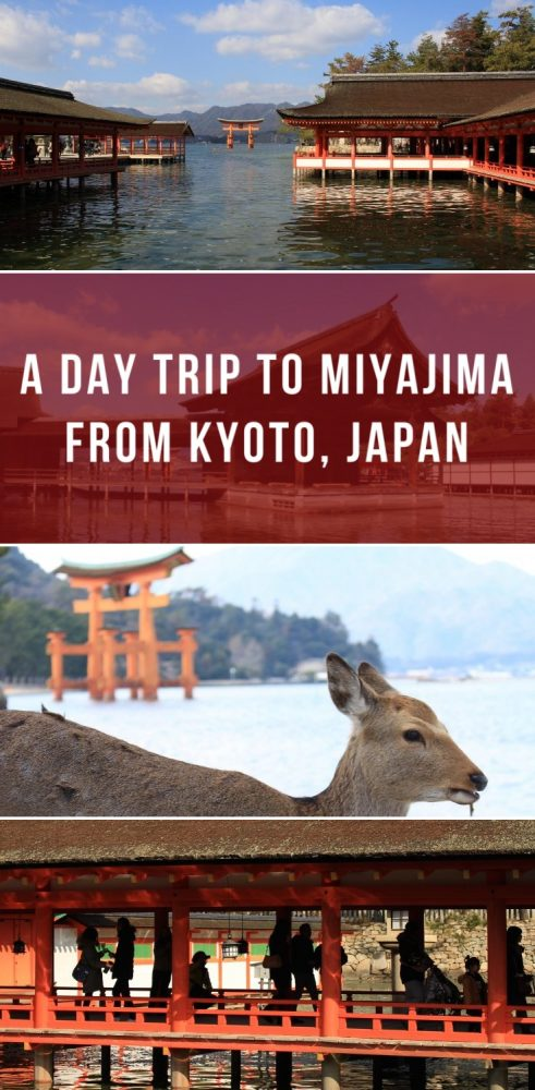 a day trip to miyajima from kyoto japan 491x1000 - A day trip to Miyajima from Kyoto, Japan