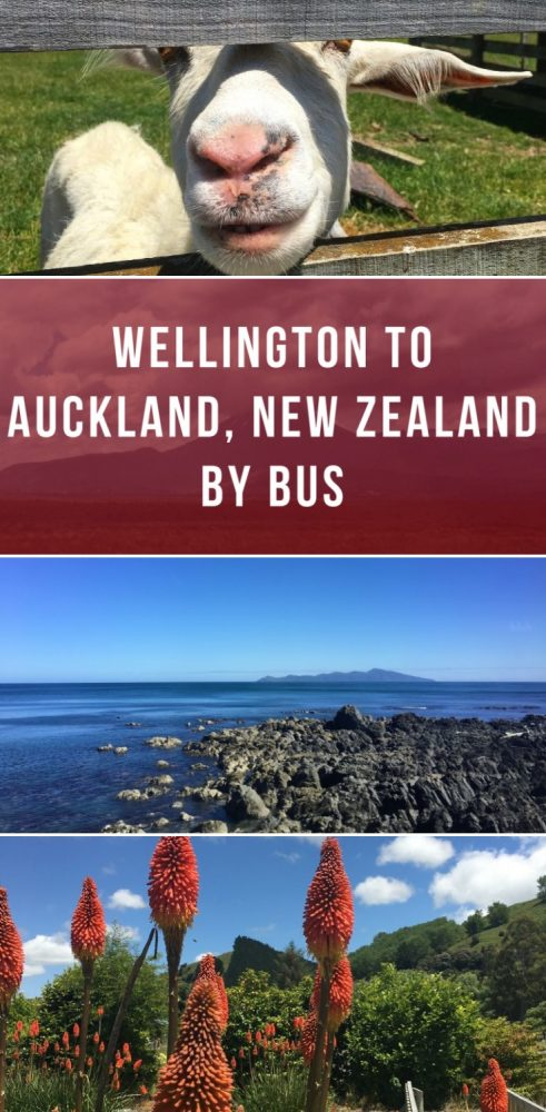 wellington to auckland new zealand by bus 491x1000 - Wellington to Auckland, New Zealand by bus