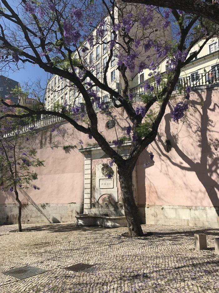alfama jacaranda trees lisbon 700x933 - A visit to Sao Jorge Castle & Alfama in Lisbon, Portugal