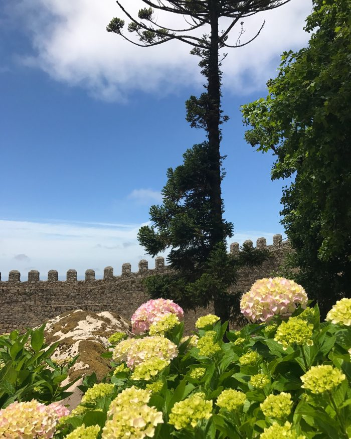 day trip to sintra castle of the moors trees 700x875 - A day trip from Lisbon to Sintra, Portugal - Castle of the Moors & Pena National Palace