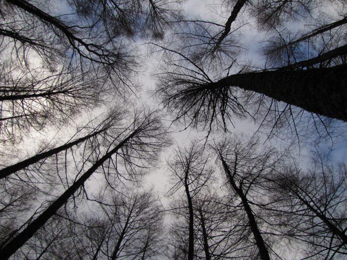 glencoe trees winter 1 700x525 - On music, travel, Frightened Rabbit, & Scott Hutchison